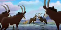 Bupu's Herd