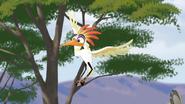 Ono-the-tickbird (188)