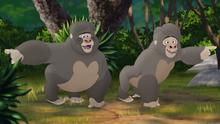 The-lost-gorillas (185)