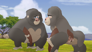 The-lost-gorillas (58)