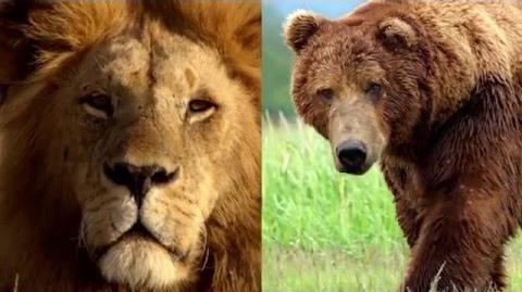 Who's Mightier? It's UnBungalievable! The Lion Guard Disney Junior