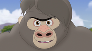 The-lost-gorillas (41)