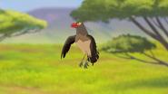 Ono-the-tickbird (243)
