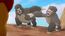 The-lost-gorillas (143)