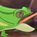 File:Chameleons-profile.png
