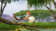 Ono-the-tickbird (335)