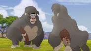 The-lost-gorillas (54)