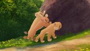 Baboons (293)