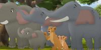 The Elephants' Concert