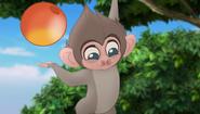 Baboons (188)