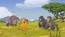 The-lost-gorillas (119)