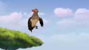 Ono-the-tickbird (258)