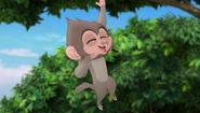 Baboons (255)