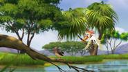 Ono-the-tickbird (329)