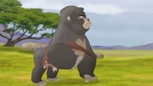 The-lost-gorillas (39)