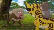 Baboons (131)