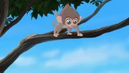 Baboons (254)