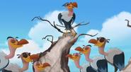 Vulturechorus