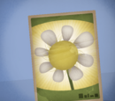 Instant Seed Packet