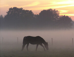 Haze with horse