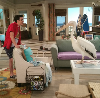 File:Joey with Pelican.png