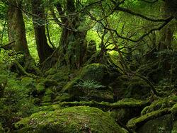 Yakushima forest 1024x768