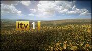 ITV1Sunflowers2010