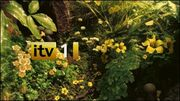 ITV1Garden2010