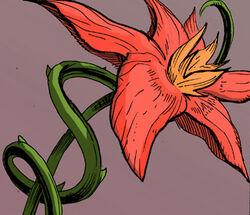 578 leeched lotus