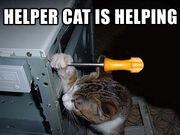 Helpercat