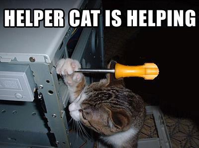 File:Helpercat.jpg