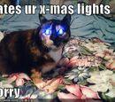 Lightbulb Cat