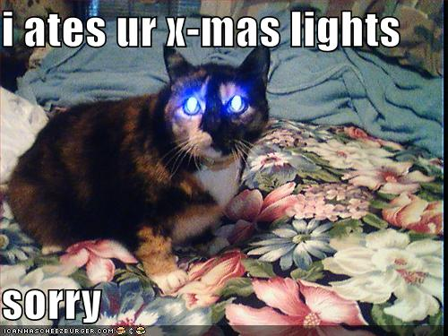File:Funny-pictures-cat-ate-your-christmas-lights.jpg
