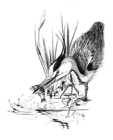 File:09-heron.jpg