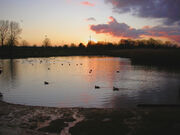 Sutcliffe Park 2