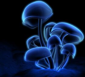 NeonMushrooms