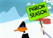 Pigeon Season