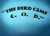 File:Bird came-1-.jpg