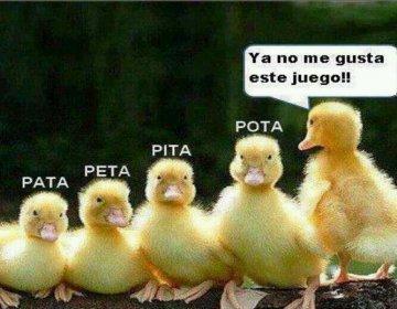 File:Imagenes-graciosas-de-patos.jpg