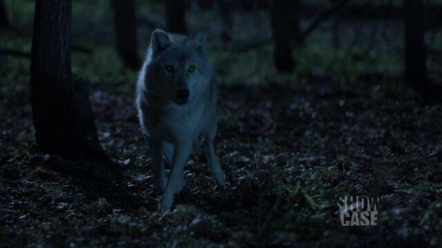File:Dyson wolf (103).jpg