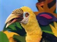 Hortense the Hornbill
