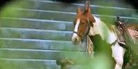 Beatrice's horse