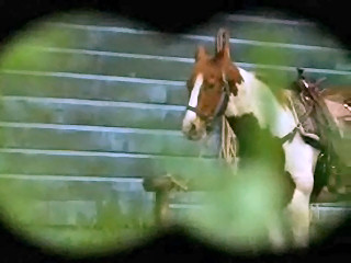 Archivo:Horse.jpg