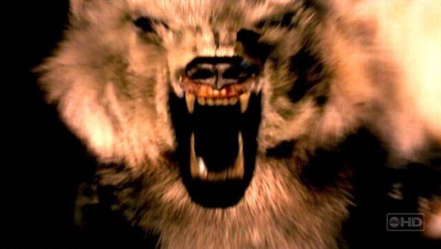 ملف:Vision polar bear.jpg