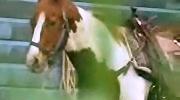 Archivo:Horse-m.jpg