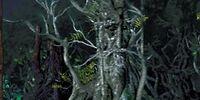 Rootcouncil