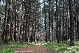 Waitforest