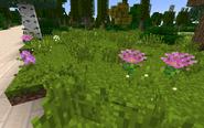 ChrysanthemumPinkGroup