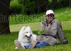 Stock-photo-the-samoyed-dog-snow-white-pet-17722951