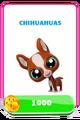 LittlestPetShopPetsPricesChihuahuas.png